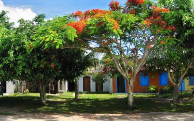 As árvores centenárias de Trancoso