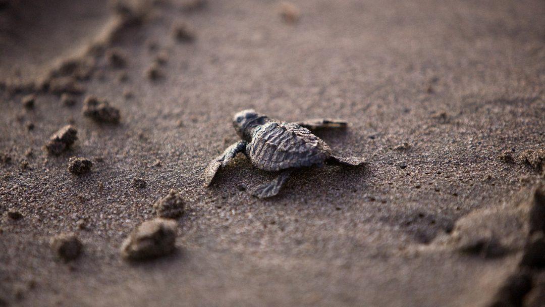 Tartarugas Marinhas: saiba mais sobre esses lindos animais!