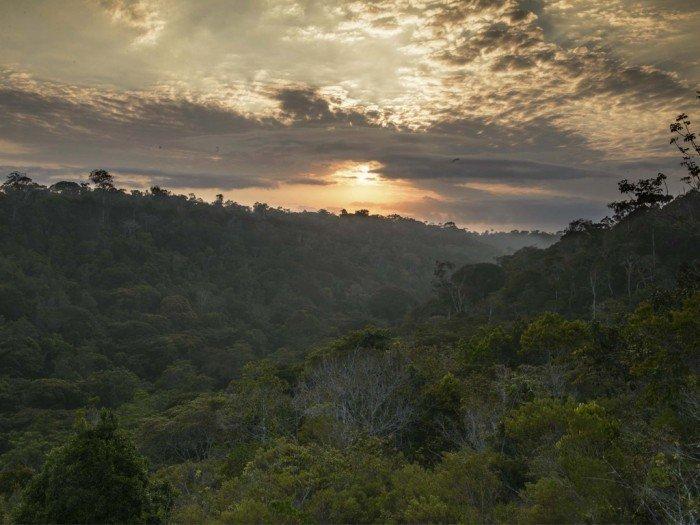 parque nacional pau brasil